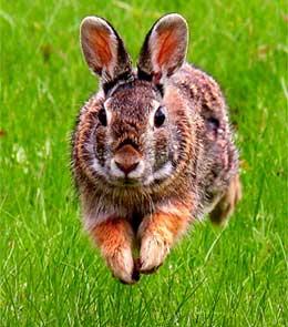 Adorable-Bunny.jpg