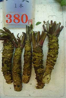 Fresh-Wasabi-Root.jpg