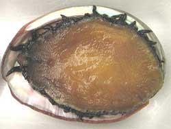 Raw-Abalone.jpg