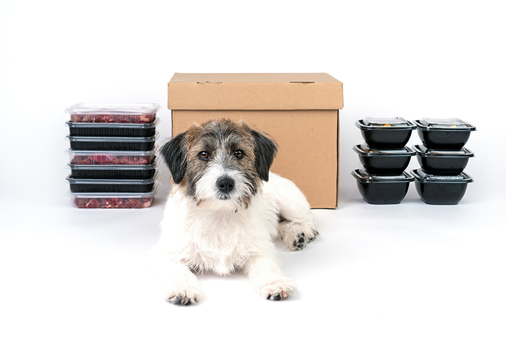 Best Fresh Dog Food Delivery Services