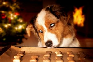 3 Ingredient Dog Treats To Pamper Your Pup